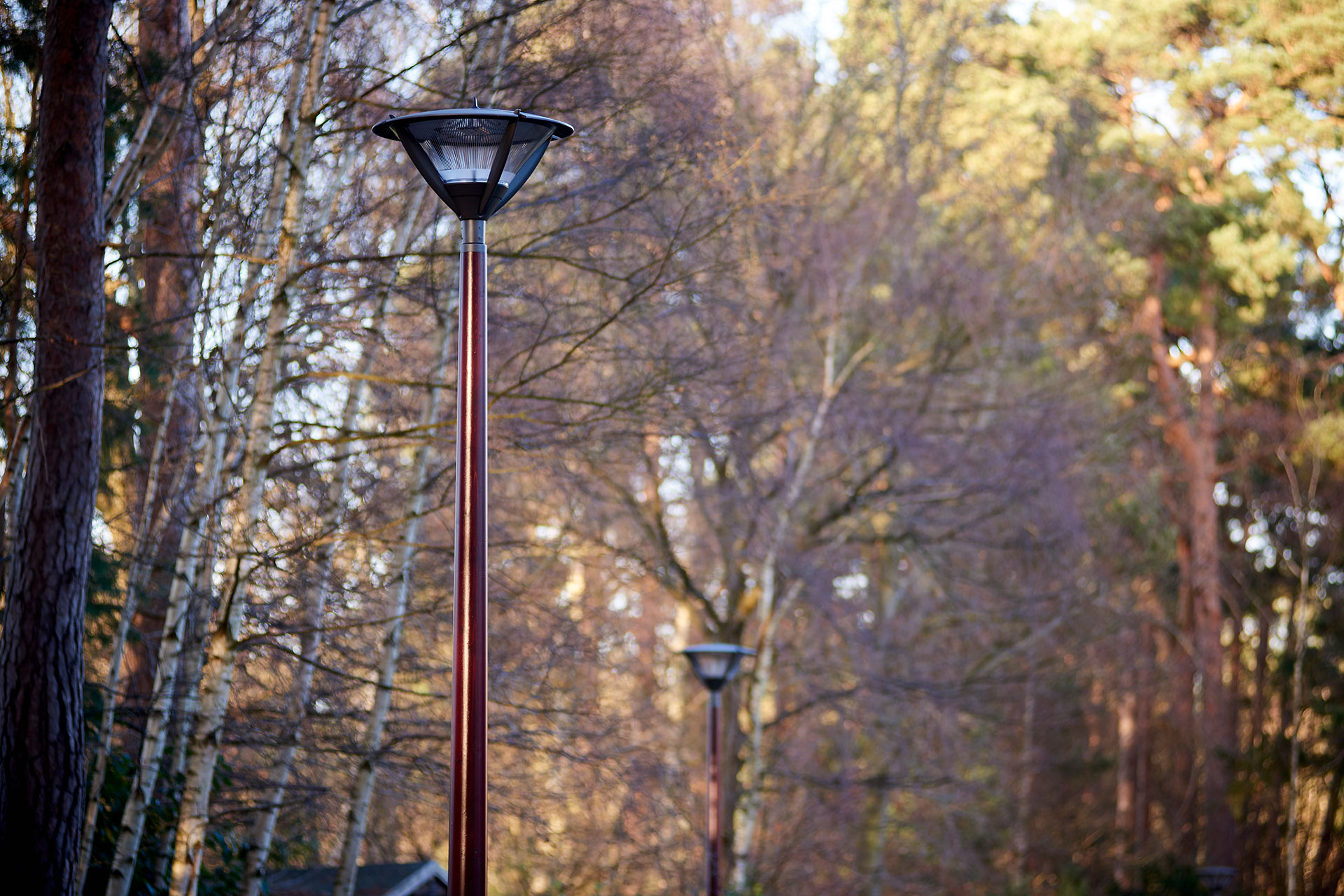 Alura luminaire discreetly integrates this woodland area